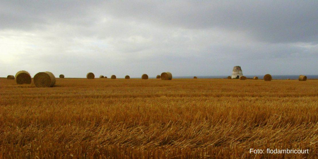 II Foro Cultura y Medio Rural